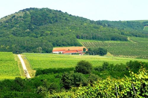 Wijngaard van Vylyan in Hongarije