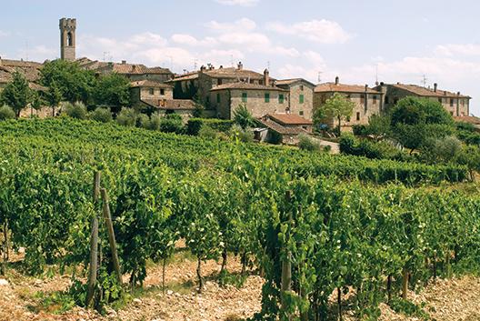 Typische Toscaanse wijngaard