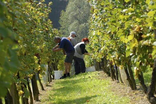 wijngaart toscane