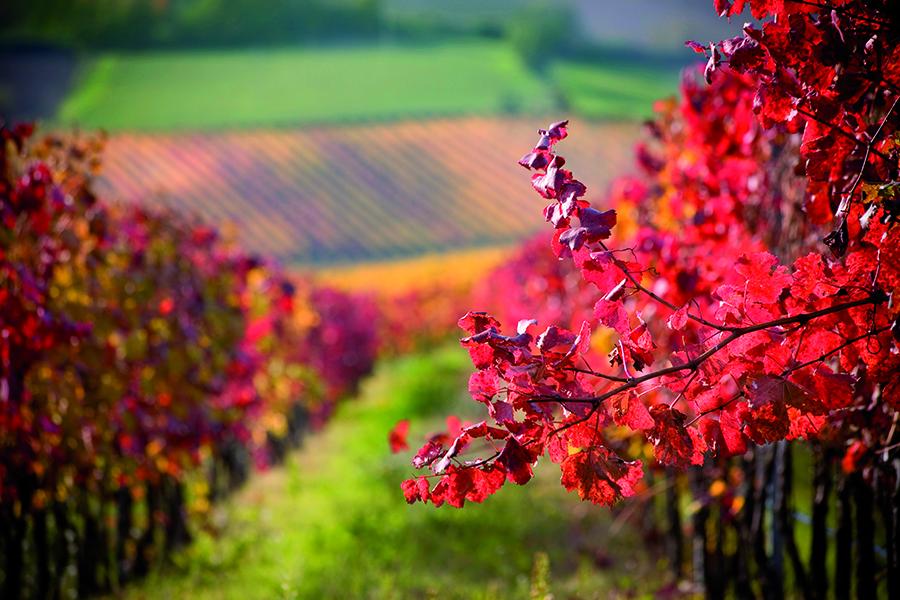 Wijnen Pays d'Oc Frankrijk