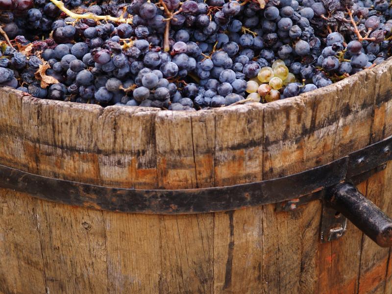 houdbaarheid wijn
