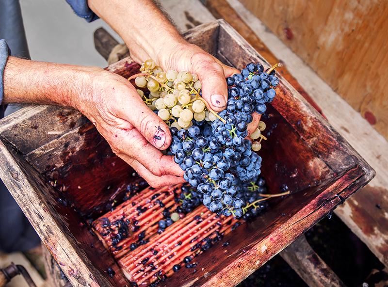 Wijn zelf maken