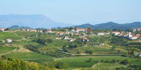 Wijnland Slovenie (2)