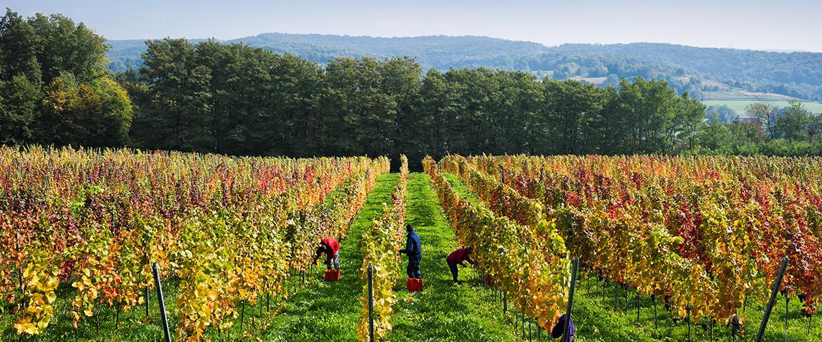 sloveense wijn marof