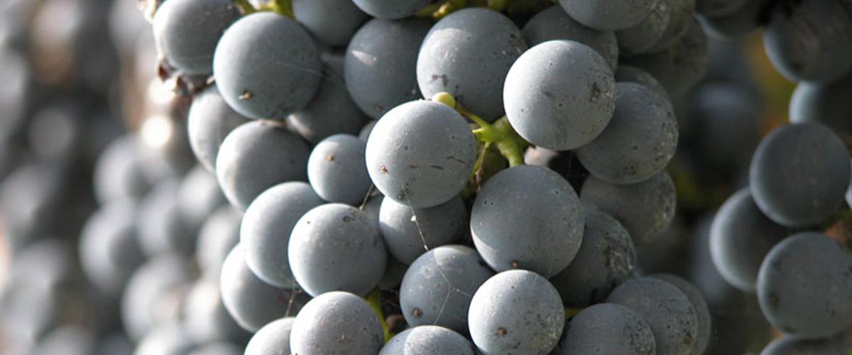 veganistische wijn