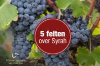Feiten over Syrah
