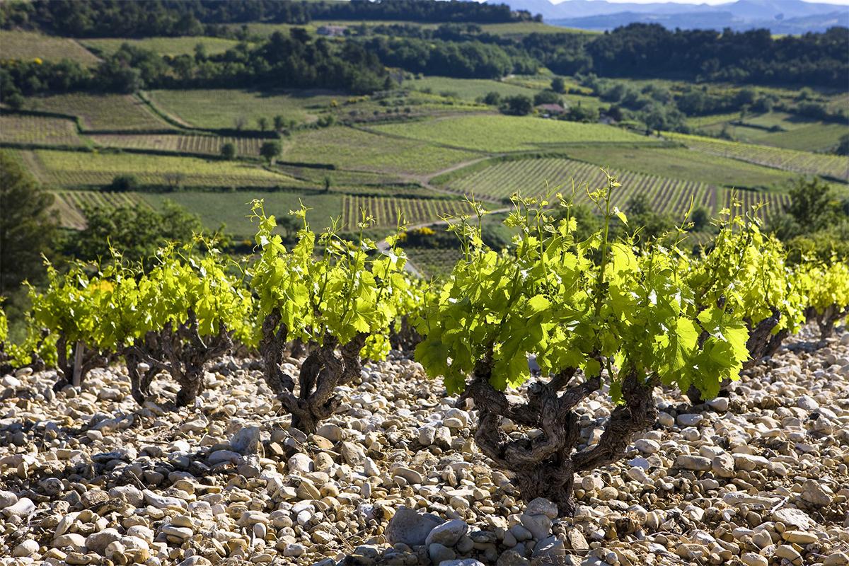 Rhone wijngaarden Frankrijk