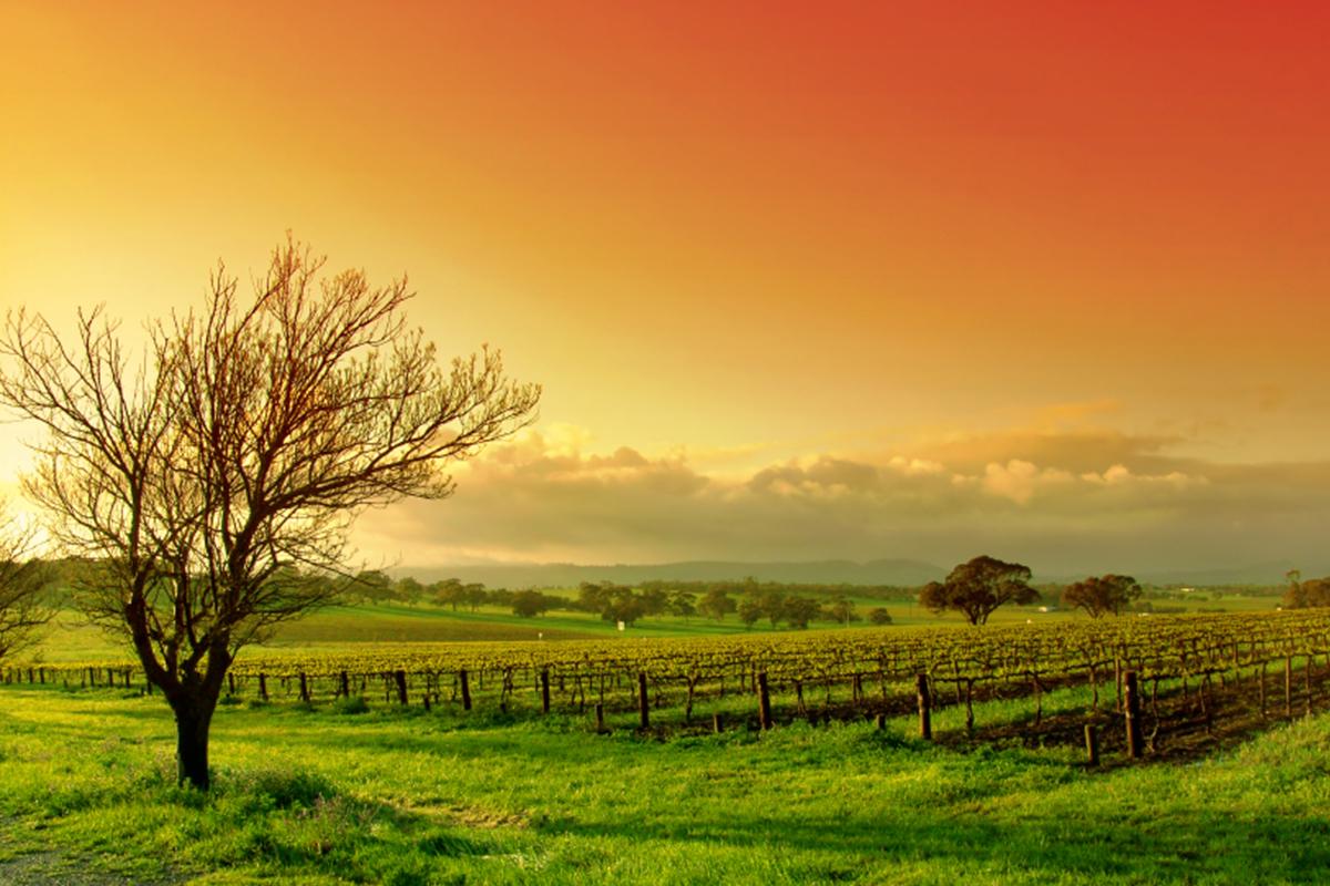 australië barossa wijngaard